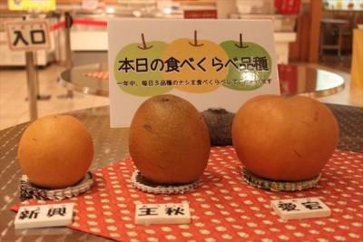nashikkokann6_R